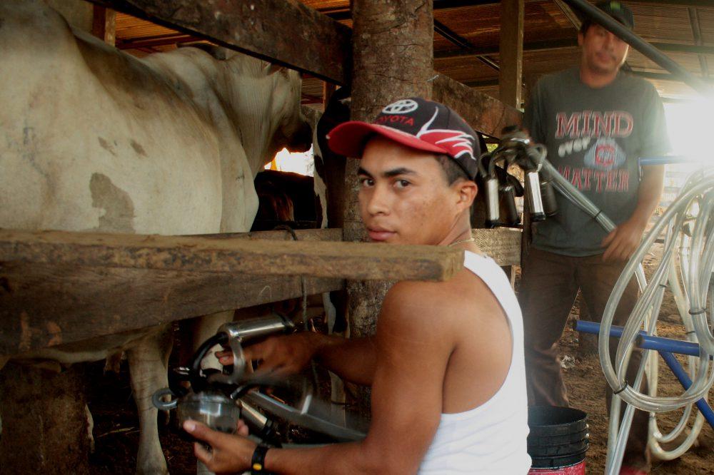 Permalink auf:Biogas Nicaragua